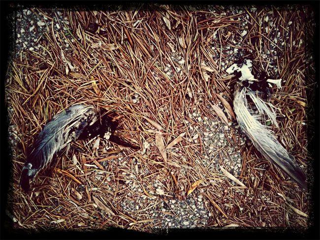 Cupidon Love Wings Fall