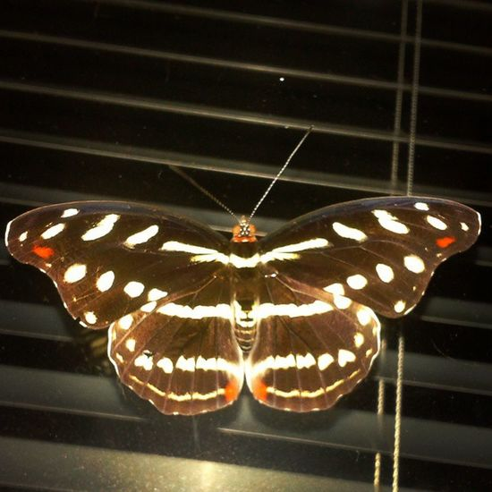 Una maricosita! Con corazoncitos en las alitas.... Mmmm Butterfly Nature Thinkingabout Heartbreaker Memories Lovely Lookbackon Alotroladodelcharco Infarfaraway Amazonas Whisper3words Aloneagain