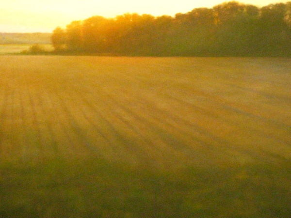 From my old Flickr account when I was a Teen. It's a Picture of a picture of a Field. Haha! Teenage Years Throwback 2008 TBT