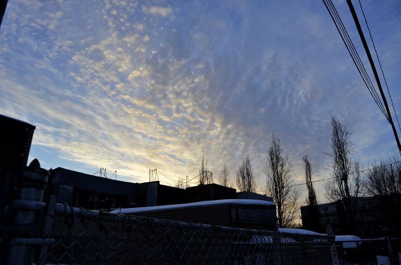 Tree Cold Temperature Ice Hockey Sky Cloud - Sky Snow Covered Snowfall Snowcapped Cold Winter