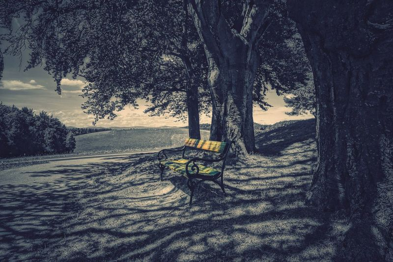 Tree Nature Tree Trunk Tranquility Outdoors Beauty In Nature No People Landscape Bench Tree Beauty In Nature Capture The Moment Melancholic Landscapes Daily Inspiration Vienna Alps A Photo Like A Painting Colorsplash Shadow