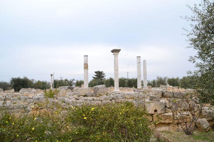 Archeology Archeological Archeological Complex ArcheologicSite Archeological Site San Leucio Canosadipuglia Italy Southern Italy