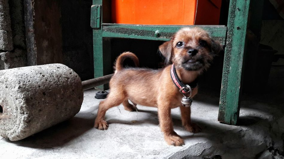 New baby Dog Animal Themes One Animal Dog Pets Domestic Animals Mammal Relaxation Zoology Animal Day Resting Pets Pets Daily Mixed Breed Eyemphilippines Eyeem Philippines Shadows Curiosity Newbie