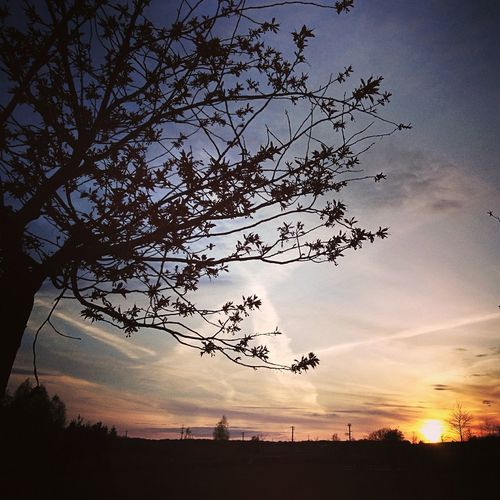 Sunlight Light May Spring Beauty In Nature Tree Fragility Nature Outdoors Sky Sunset Magiczne Ogrody