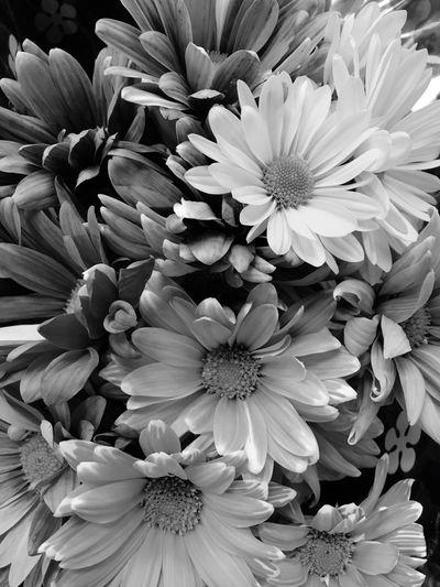 Flowers Flower Outdoors Flower Head First Eyeem Photo