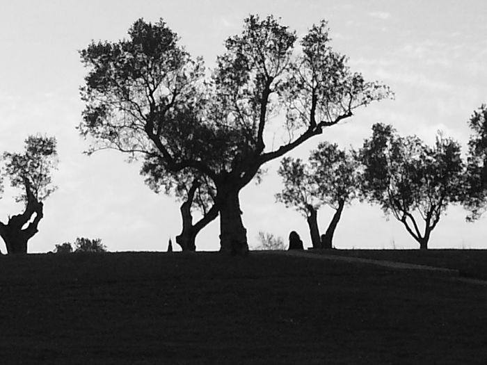 Monochrome Black And White Urban Nature Black & White