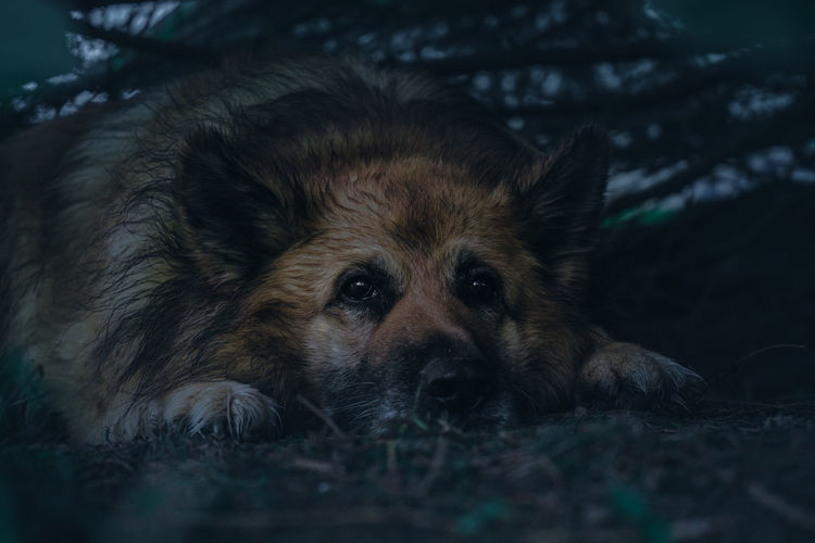 Portrait of dog resting on field