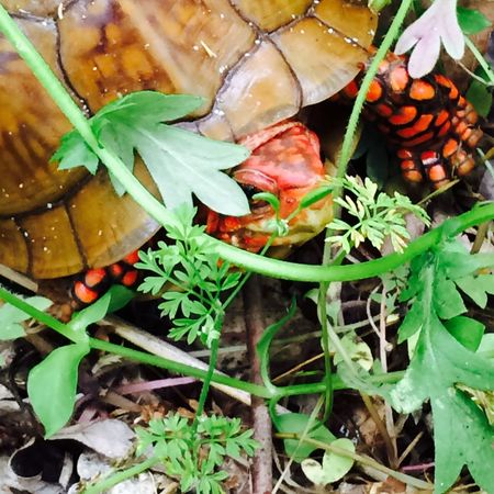 Turtle Cuteness Slow And Steady Wins The Race Spring Forest Freshness No People Green Color Close-up