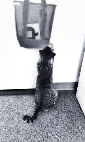 Hello hello? Have you got the treats I ordered? Please turn the knob and come in! Oh I guess I will just have to open this door my own kitty self. Tadaa Community Tadaakitties Cat Lovers Cats Cute Pets Blackandwhite Cat♡ Cat Cute