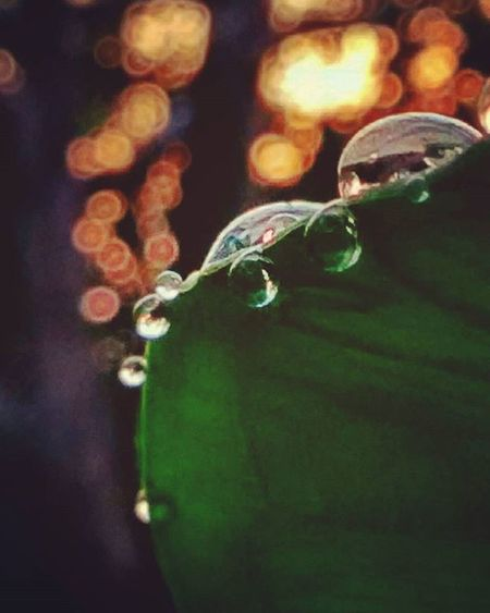 """""""Always be touching her, even when your hands cannot reach her"""", said the rising sun to waterdrops upon the leaf. -J.R. Rogue . . . . Waterdrops Teardrops Mothernature Naturegram Nature Naturallight Sunrise Fajar Leaf Bokeh Bokehlicious Bokehgraph Mobilephotography Lerep Kampungseni Photographcatcher Ksagamaksara"""