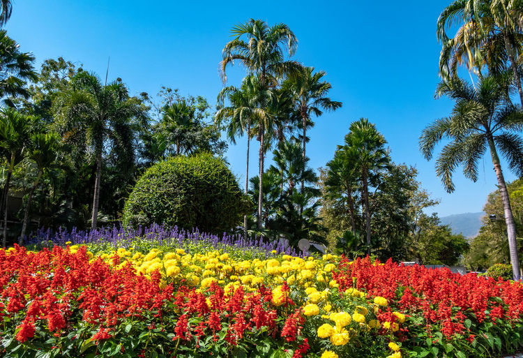 Flowers growing in park against clear blue sky