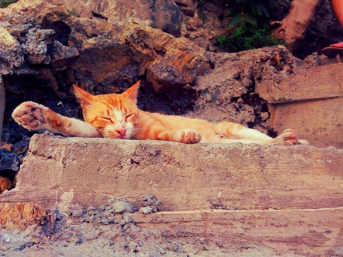 Cat ♡ Sleeping