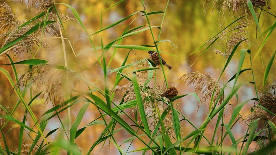 Nature Animal Wildlife Animals In The Wild No People Plant Outdoors Day Close-up Animal Themes