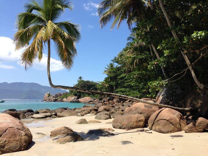Aventureiro Beach Beauty In Nature Nature No People Palm Tree Tranquil Scene Tree