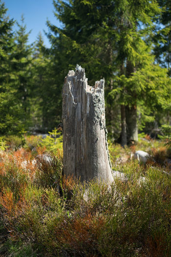 Wooden post on tree stump in forest