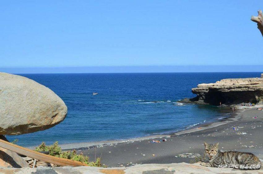 Nature Fuerteventura Meer Insel