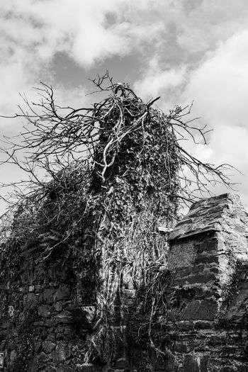 Winterfell Game Of Thrones Ruined Building Blackandwhite Black And White Black & White