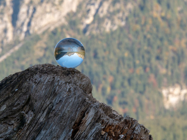 Rock - Object Focus On Foreground Tree Solid Rock Nature Day Plant No People Sphere Outdoors Animal Themes Close-up Crystal Ball Animals In The Wild Beauty In Nature Animal Wildlife Transparent Animal Mountain