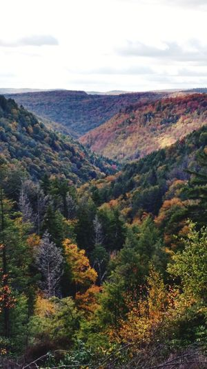 skyline forest fall autumn woods forest trees valley mountain