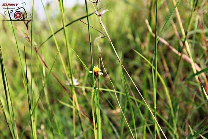 Grassland (Manual Focus) Flowers Greenery Canon Sunny_Frames