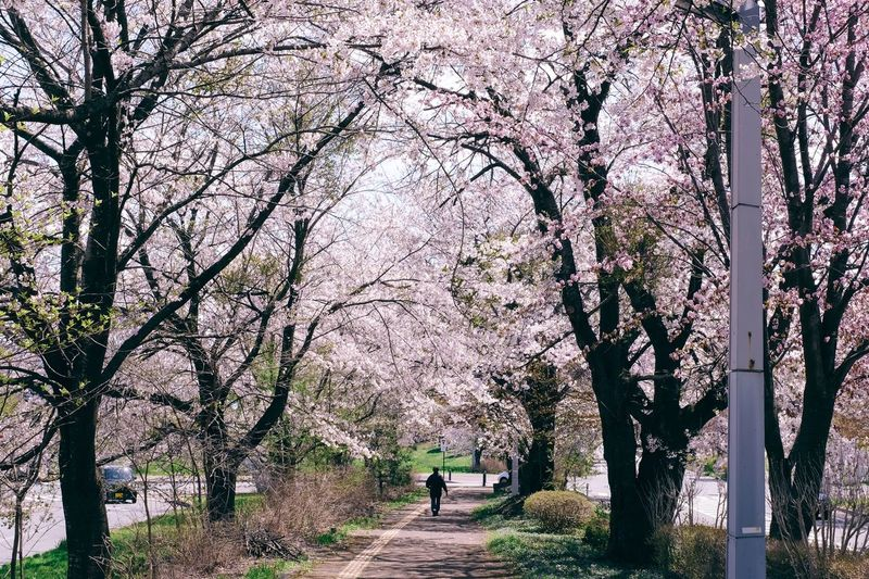 Scenic view of flower trees