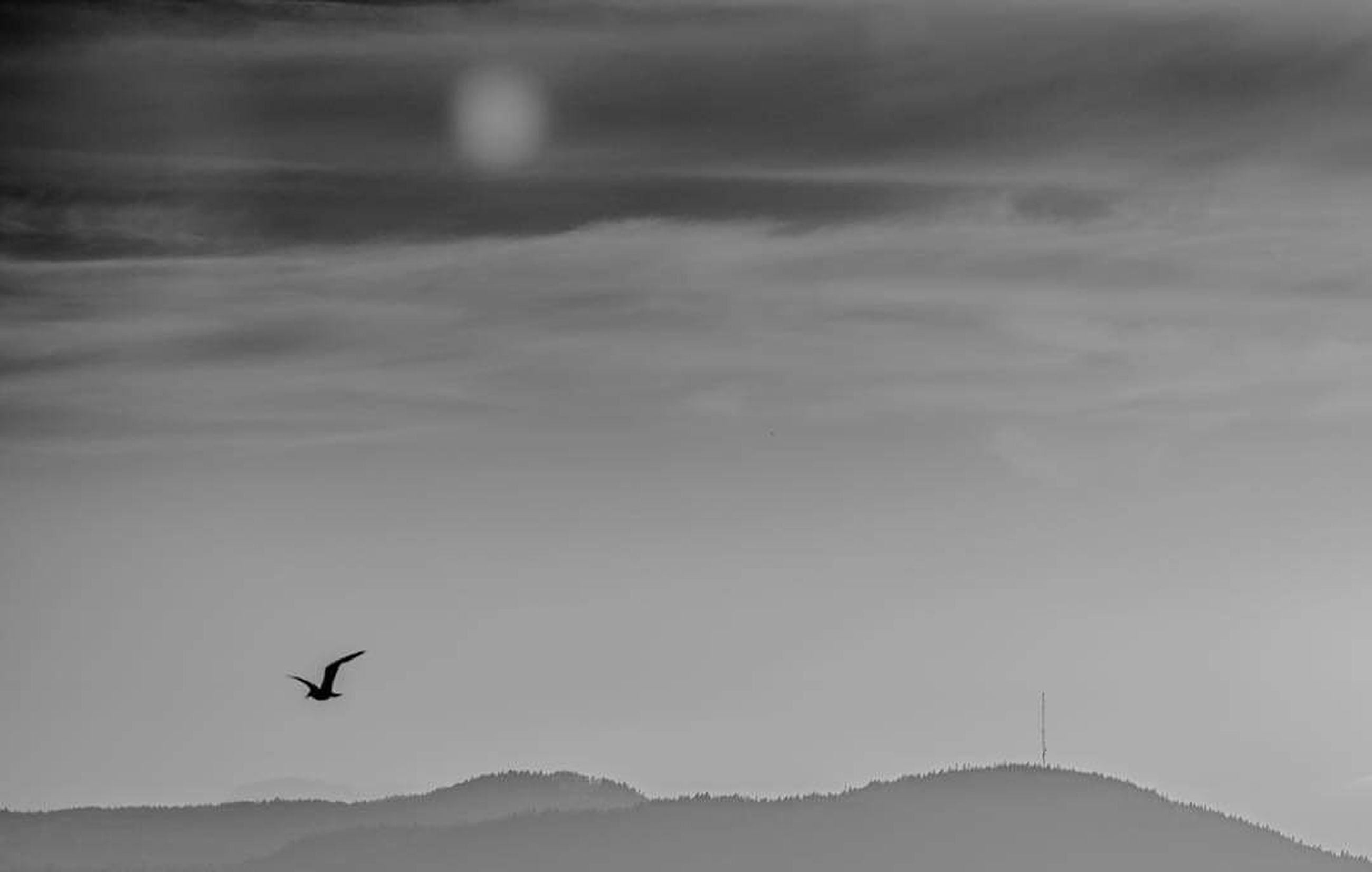 bird, vertebrate, animal themes, animals in the wild, animal, one animal, animal wildlife, flying, spread wings, mid-air, sky, beauty in nature, no people, scenics - nature, silhouette, tranquil scene, tranquility, cloud - sky, nature, water, outdoors, seagull