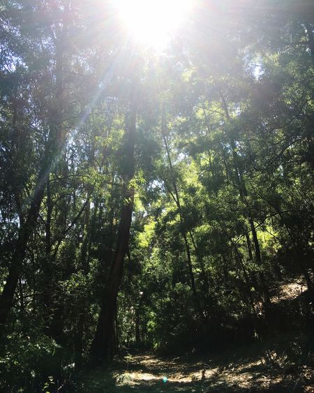 Arouca Forest