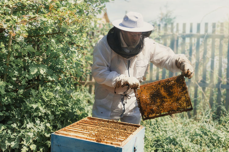 Man working with bee hives outdoors