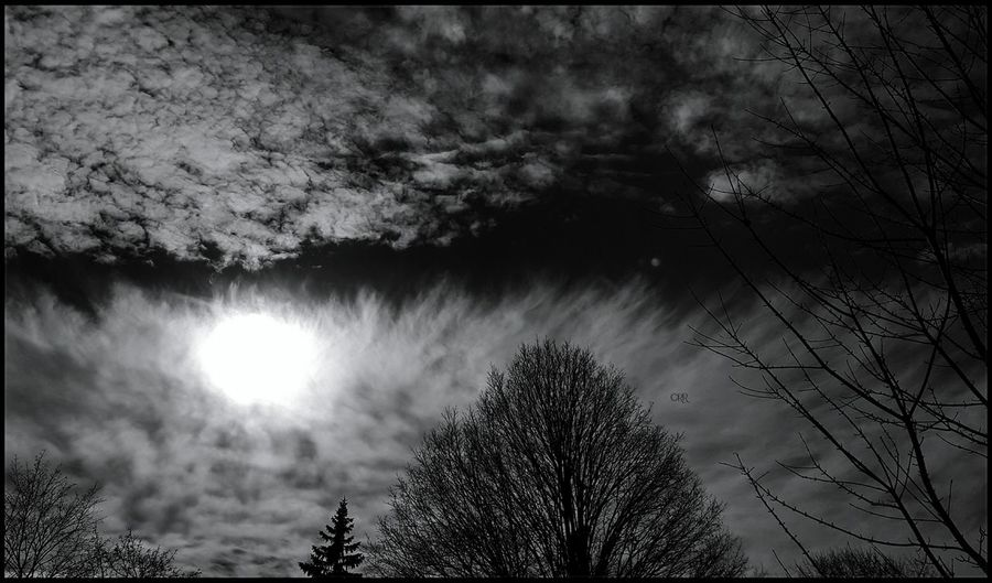 Moody Sky Naked Trees Tree Nature Beauty In Nature No People Low Angle View Cloud - Sky Outdoors Tranquility Scenics Treetop Day Fortheloveofblackandwhite Bnw Contrast