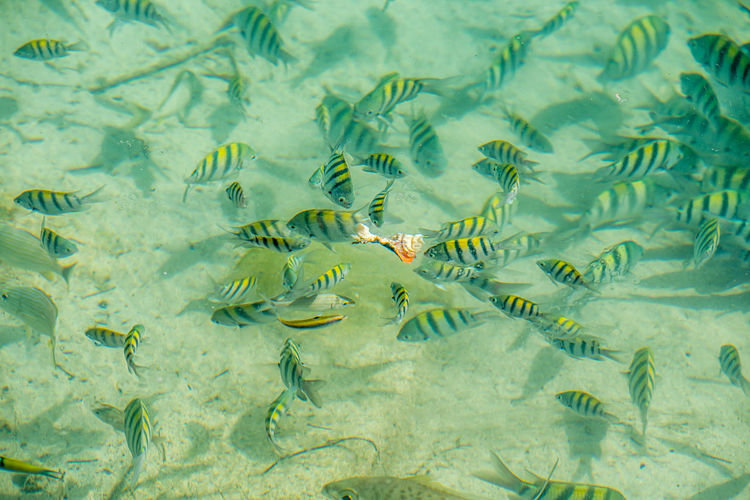 High angle view of fishes swimming in ocean
