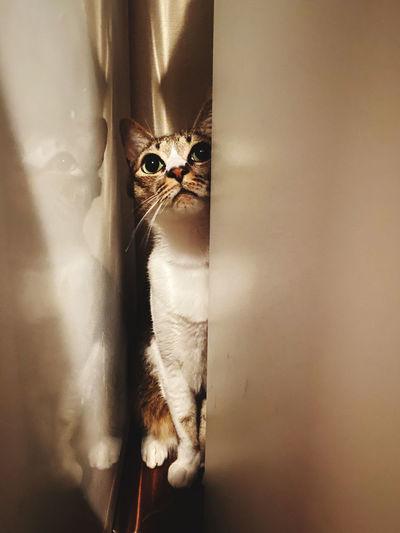 Portrait of cat looking up