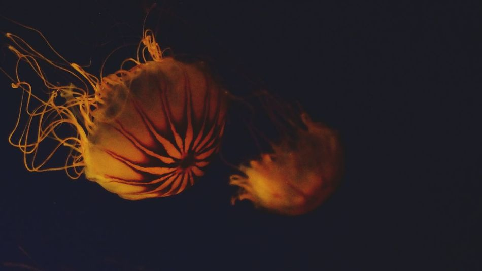 Jelly Fish Enjoying Life Popular Photos EyeEm Best Shots