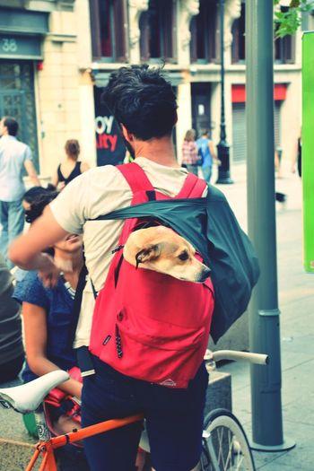 Cuty Dog Inthebag Day City Life