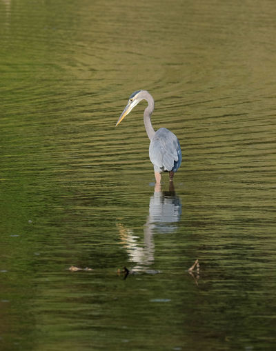View of a bird in lake