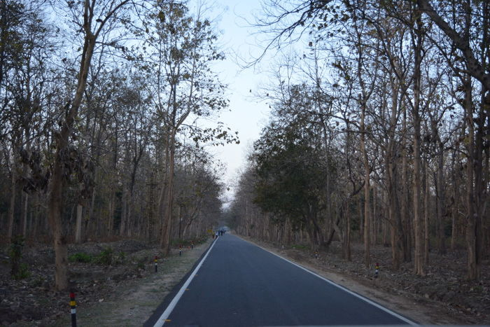 Day Nature Outdoors Road Road Less Travelled Road Through Jungle The Way Forward Transportation Tree