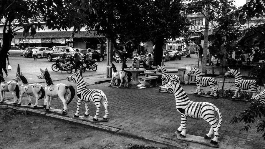 View of zebra crossing on street in city