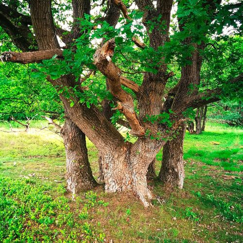 The Week On EyeEm Green Color Tree Outdoors No People Nature Stubben Growth Oak
