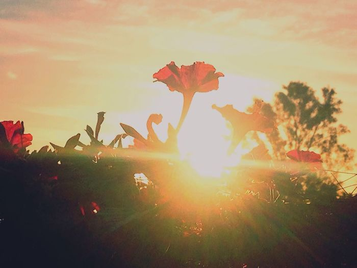 Pink Flower Orange Sky And Orange Sun First Eyeem Photo EyeEm Best Edits 8:08pm