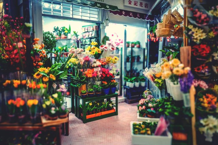 HK Flower Shop miniature Flower Retail  Variation Store Choice Freshness Flower Shop Plant Multi Colored For Sale Consumerism Small Business Business Flower Market Abundance Market Large Group Of Objects Fragility Beauty In Nature Growth Capture The Moment Fine Art Photography From My Point Of View Lost In The Landscape KITTE