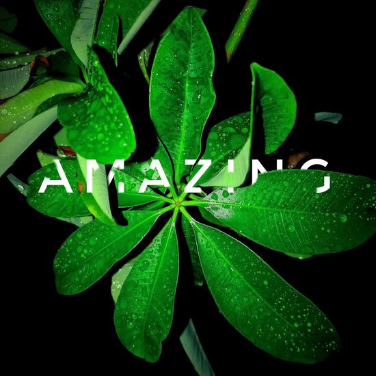 Green Color Close-up Nature Growth Freshness Plant Black Background Colours Of Life Photooftheday Wallpaper Photography Souls Clear Photo Love Photography Never Settle Rainy Days Cool...