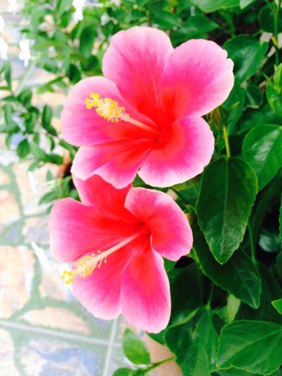 Beautiful flowers. 🌺🌺