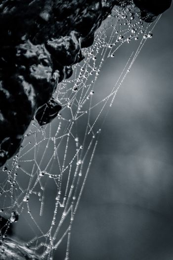 The Week On Eyem EyeEm Best Shots Showcase: February Grounds For Sculpture B&w Black And White Photography Black&white Blackandwhite Photography Black & White Black And White Spiderweb Dew Dew Drops