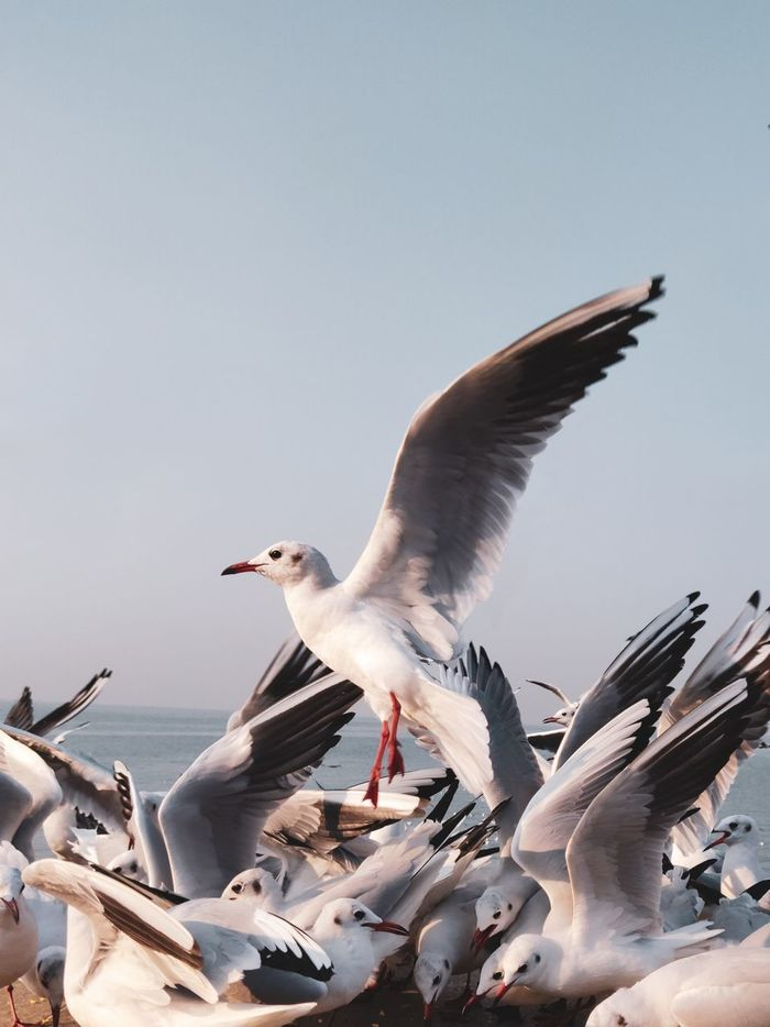 Close-up of seagulls against sky