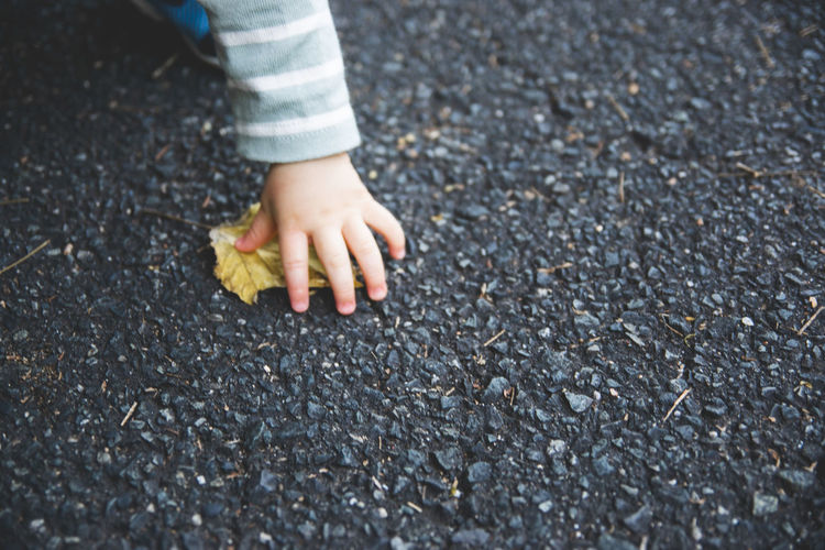 Cropped hand of kid holding leaf on road