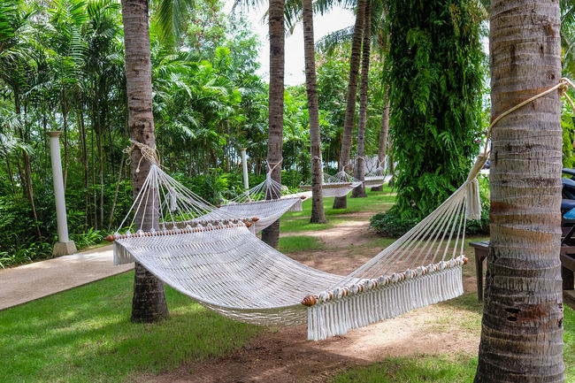 Resort Hotel Beauty In Nature Daybed Forest Green Color Growth Hammock Nature No People Outdoors Resort Tranquility Tree Tree Trunk