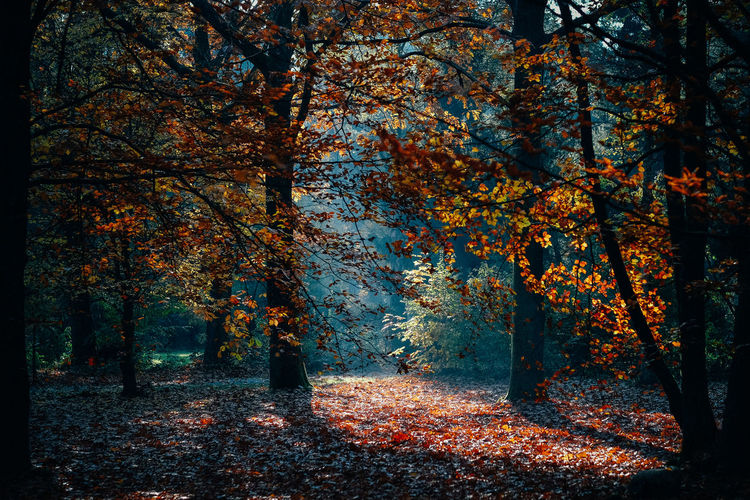 Sunlight falling on trees in forest during autumn