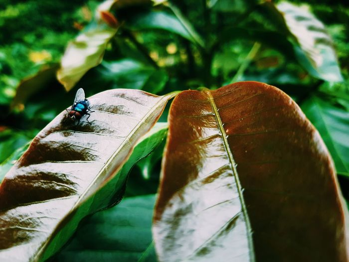 🎋Brown Leaves And Green Leaves Coffee Leaves Fly🐝 Reasting Insects Beautiful Nature Insect Photography RainyDay♡ ☔💧📸😉