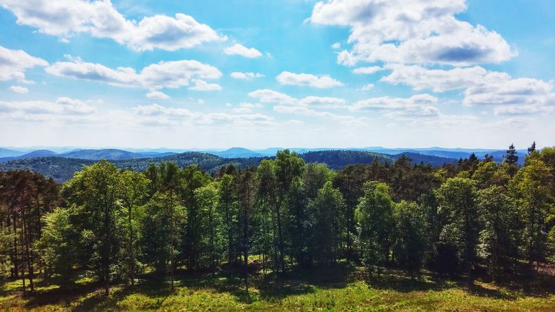 Forrest Photography Landscape Landscape_photography Landscape_lovers Wide Angle Far Farawayfromhome The Great Outdoors - 2016 EyeEm Awards Trees Sky And Clouds Sunny Day Outdoors Outdoors Photograpghy  Nobody Allone  EyeEm Best Shots EyeEm Nature Lover EyeEm Best Shots - Nature Eyem Nature