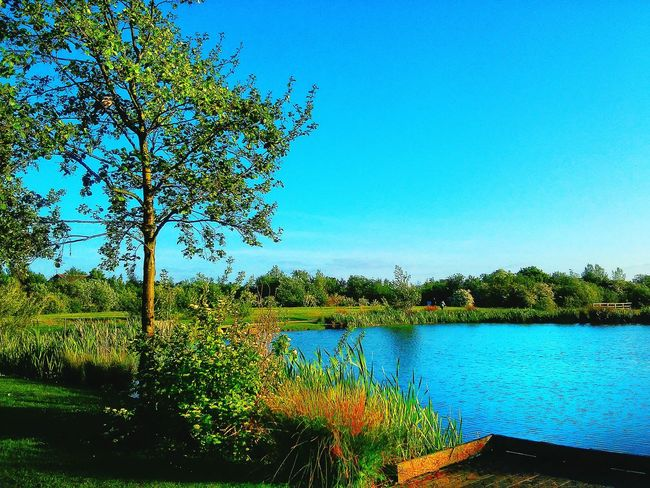 Blue sky .... Blue land Nature By My Side Green Grass Landscape_Collection Beautiful Day EyeEm Nature Lover Blue Sky Peaceful Free Open Edit Blue Water Blue Sky