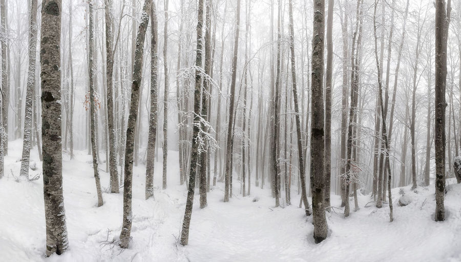 Trees in snow covered forest